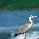 Natura d'Italia: le aree protette tra conservazione e sviluppo