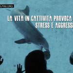 Delfini, Lav e Marevivo chiedono chiusura dei delfinari in Italia