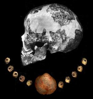Collana di conchiglie dal sito di Ksar Akil (Libano)  trovate associate con uno scheletro di donna moderna databile 39mila-41mila anni fa (fonte: Museo di Storia Naturale di Londra)