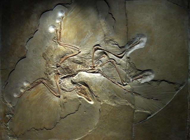 Dinosauri_uccelli