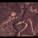 I primi cani in Europa risalgono a più di 18mila anni fa