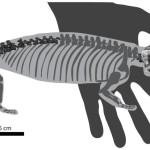 Scoperto in Mozambico un antenato degli attuali mammiferi