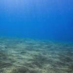 Virus negli abissi marini sono il motore della catena alimentare