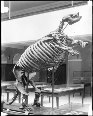 Estinzione megafauna