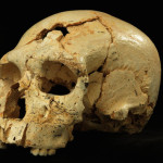 Ridisegnata la linea evolutiva dei Neanderthal in Europa
