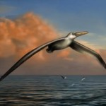 20 metri di apertura alare per il più grande uccello mai esistito