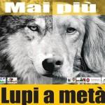 """Grosseto: """"mai più lupi a metà"""" <br> Approvato il piano contro il randagismo canino"""