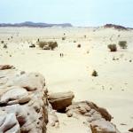 Vegetazione del Medio Oriente resistente ai cambiamenti climatici