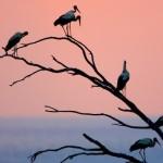 Flyways, la colonna sonora delle migrazioni
