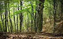 Parco dei simbruini accordo con i cacciatori per tutelare for Quercia sempreverde