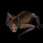 Desmodus Draculae: il vampiro gigante