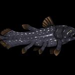 Latimeria, il pesce preistorico… non proprio estinto