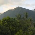 101 nuovi coleotteri in Papua Nuova Guinea e portano il cognome degli abitanti dell'isola