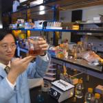 Idrogeno dalle piante: scoperta potrebbe sconvolgere il mercato energetico