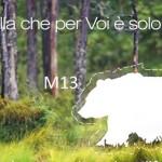 Orso bruno M13: quando un orso confidente non si può recuperare