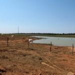 La deforestazione per l'agricoltura in Amazzonia non porterebbe nessun vantaggio