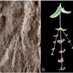 Primo esempio di aiuola fiorita in una sepoltura sul Monte Carmelo