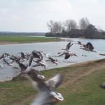 OMS, niente panico per influenza aviaria in Cina