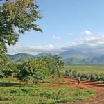 Mercato dei biocombustibili: la FAO denuncia la possibile esclusione dei piccoli produttori