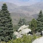 Studio dell'US Forest Service: assenza del fuoco pregiudica il sottobosco