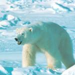 Cambiamenti climatici: con la temperatura ora cambia la vegetazione, sconosciuti gli effetti sugli ecosistemi