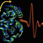 Svelata la sinfonia della vita: le proteine vibrano per comunicare
