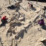 Svelato il mistero del più grande cimitero di balene