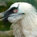 """Specie minacciate in tutto il pianeta a causa dei """"risparmi"""" sulla biodiversità"""
