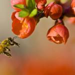 Greenpeace: le api sono minacciate dai pesticidi