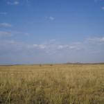 L'uso dei fertilizzanti in agricoltura rende instabili le praterie