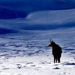 Gli studiosi dei mammiferi a congresso nel Parco d'Abruzzo