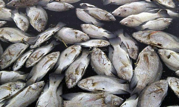 pesci venezia