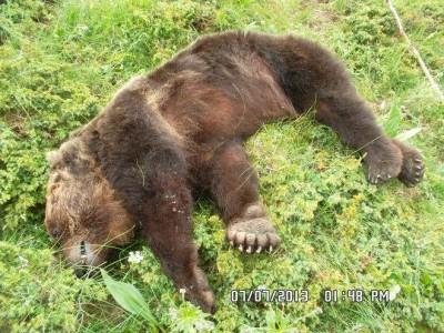 L'orso Stefano