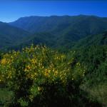 Il restauro delle nostre foreste: quando la necessità (ecologica) fa virtù