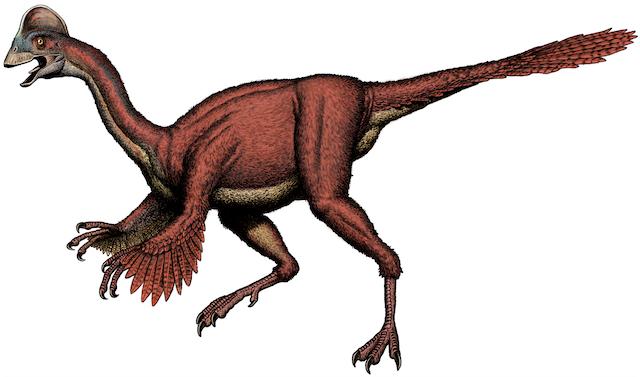 Ricostruzione del nuovo dinosauro oviraptorosauro Anzu wyliei, del Nord America  (crediti: Carnegie Museum of Natural History)