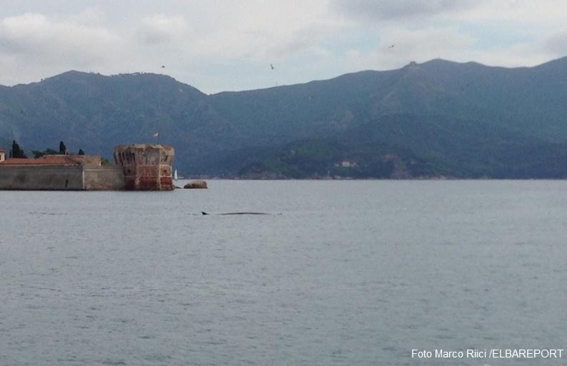 Balene Portoferraio