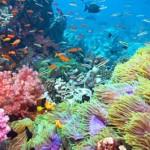 Migrazioni oceaniche: così il corallo sfugge alla minaccia del clima