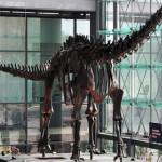 Sauropodi: ecco perchè le loro uova erano tanto piccole