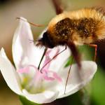 Impollinatori e fiori: un esempio di come incidono cambiamenti climatici e attività umane