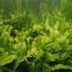 Come cambiano gli ecosistemi marini