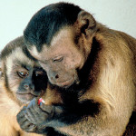 Anche le scimmie hanno una personalità