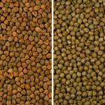 Nuove tecnologie e ingredienti per migliorare i prodotti senza glutine