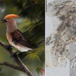 Nuova specie di uccello basale del Cretaceo scoperta in Cina