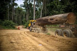 Nuovo studio quantifica la rigenerazione delle foreste tropicali