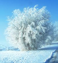 Elegia per il freddo