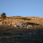I direttori delle aree protette interrogano i leader politici: quale futuro per i Parchi italiani?