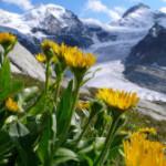 Svizzera, gli spostamenti di piante, farfalle e uccelli coi cambiamenti climatici