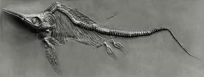 Fischsaurier_fg01