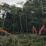 Foreste primarie: il 95% non è adeguatamente protetto