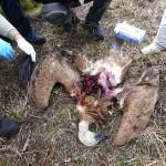 Eolico Abruzzo: colpo di mano pre-elettorale, abrogata norma pro orso e grifoni